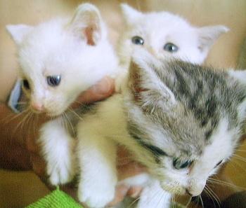 3cat_ruri_hikari_mican