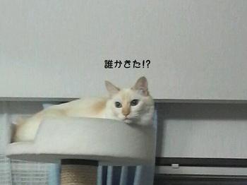 Shou1