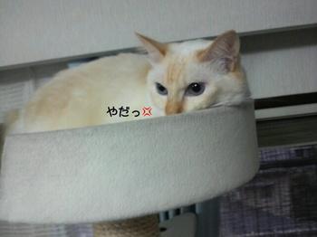 Shou2