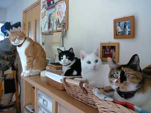 Chara3cats1_2