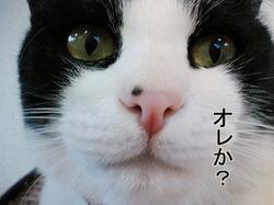 Photo_25_3