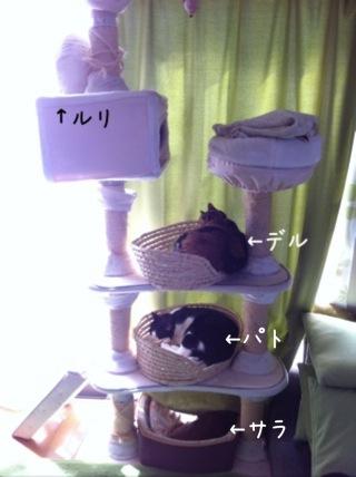 猫マンションに