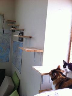 猫階段完成!