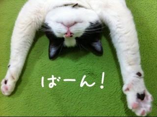 レッグウォーマー猫